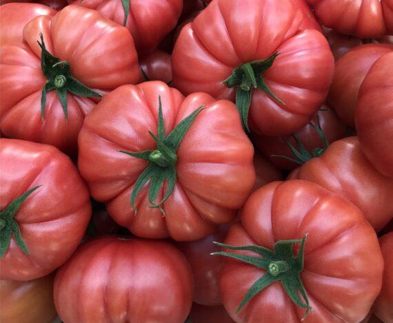 pembe domates cassarosa kg